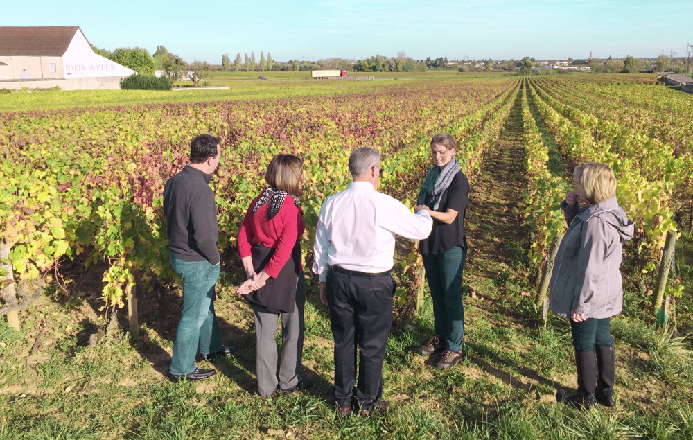 Discover the depth and complexity of Burgundy wines